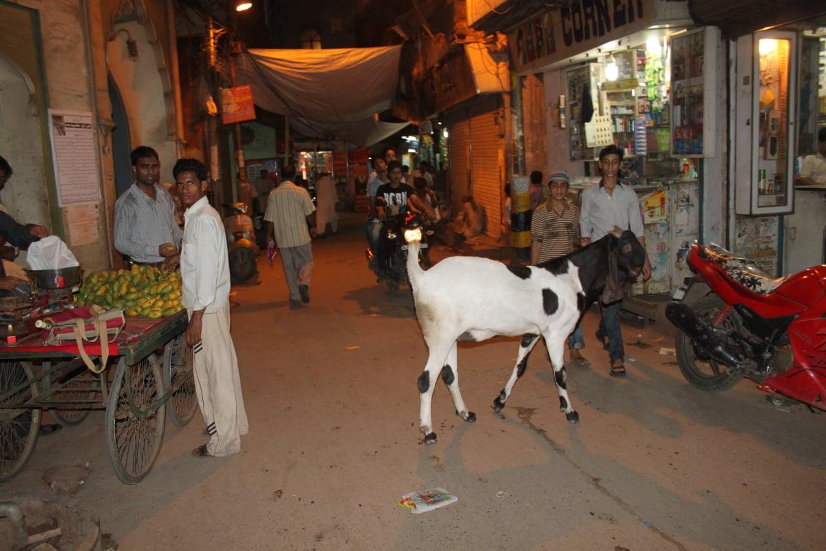 Delhi Mes Indes Galantes