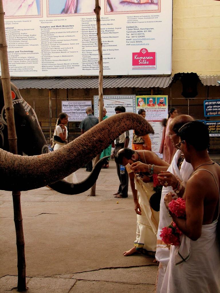 éléphant-animal-sacré-tamul-nadu