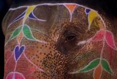 Éléphant Symbole Sacré d'Asie
