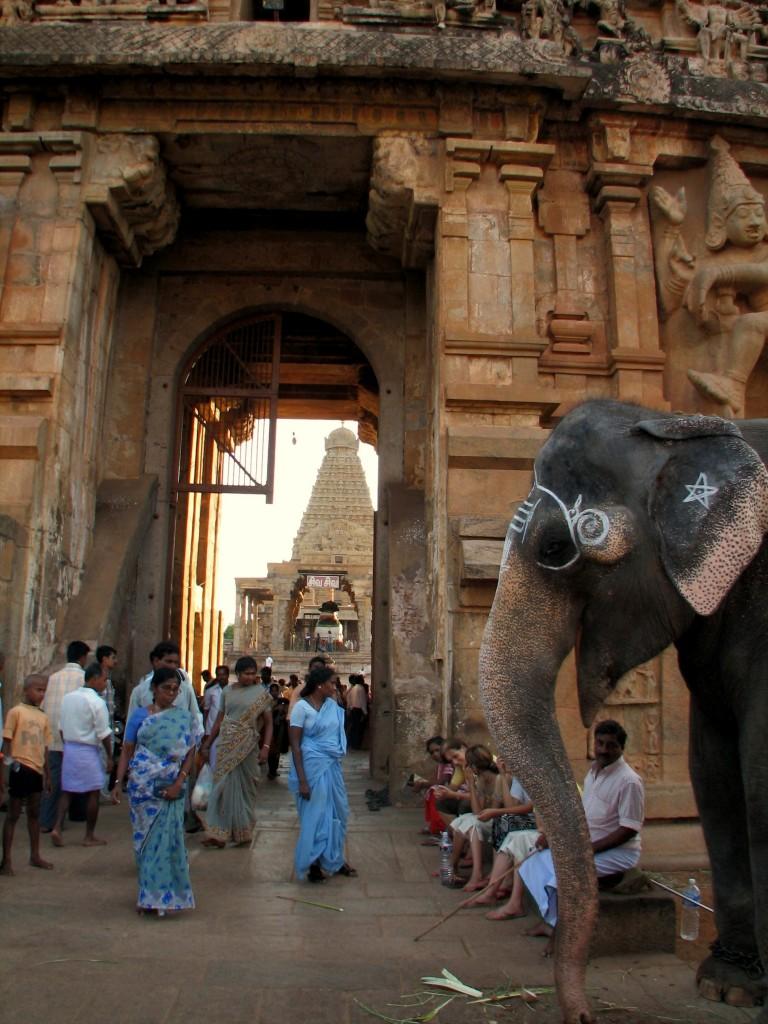 éléphant  sacré-temple
