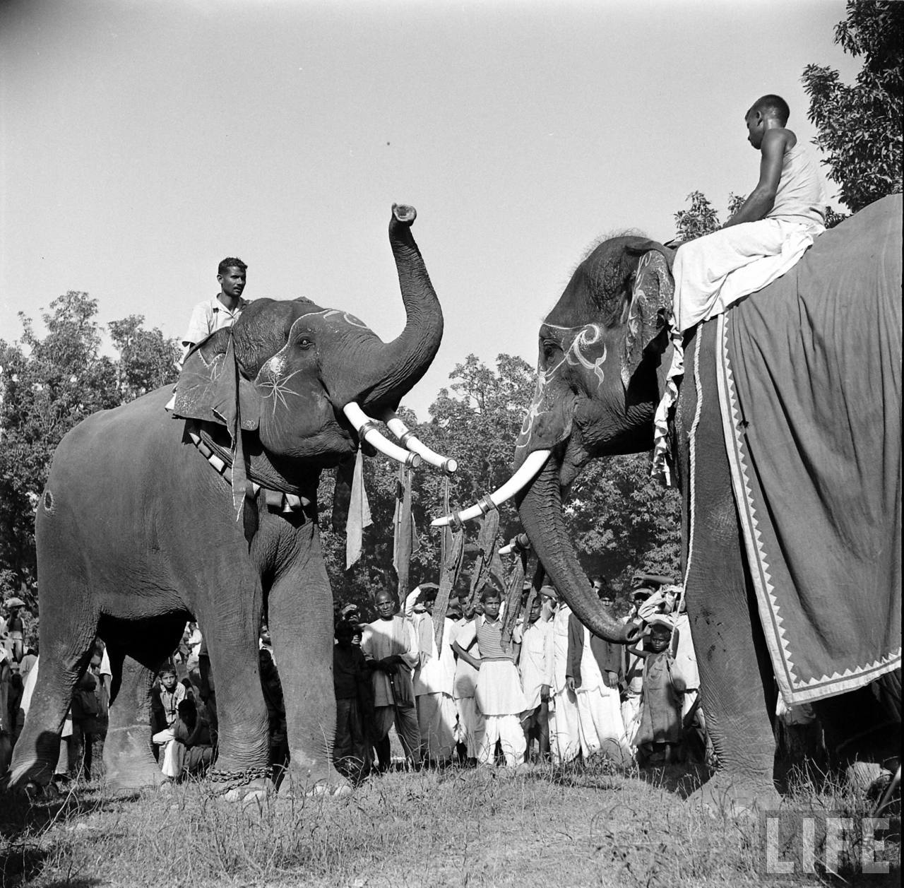 Elephant En Inde Signification Éléphant symbole sacré d'asie | mes indes galantes blog