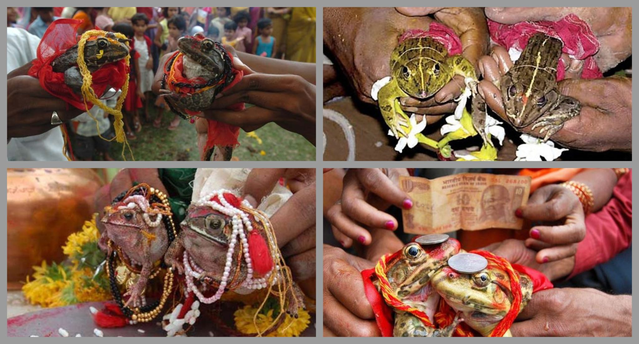 mariage grenouille inde MOUSSON