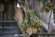 Le bétel : une plante sacrée à usage curatif