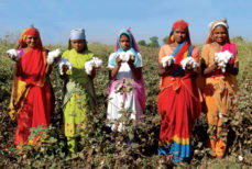 Le khadi: coton indien, coton historique.