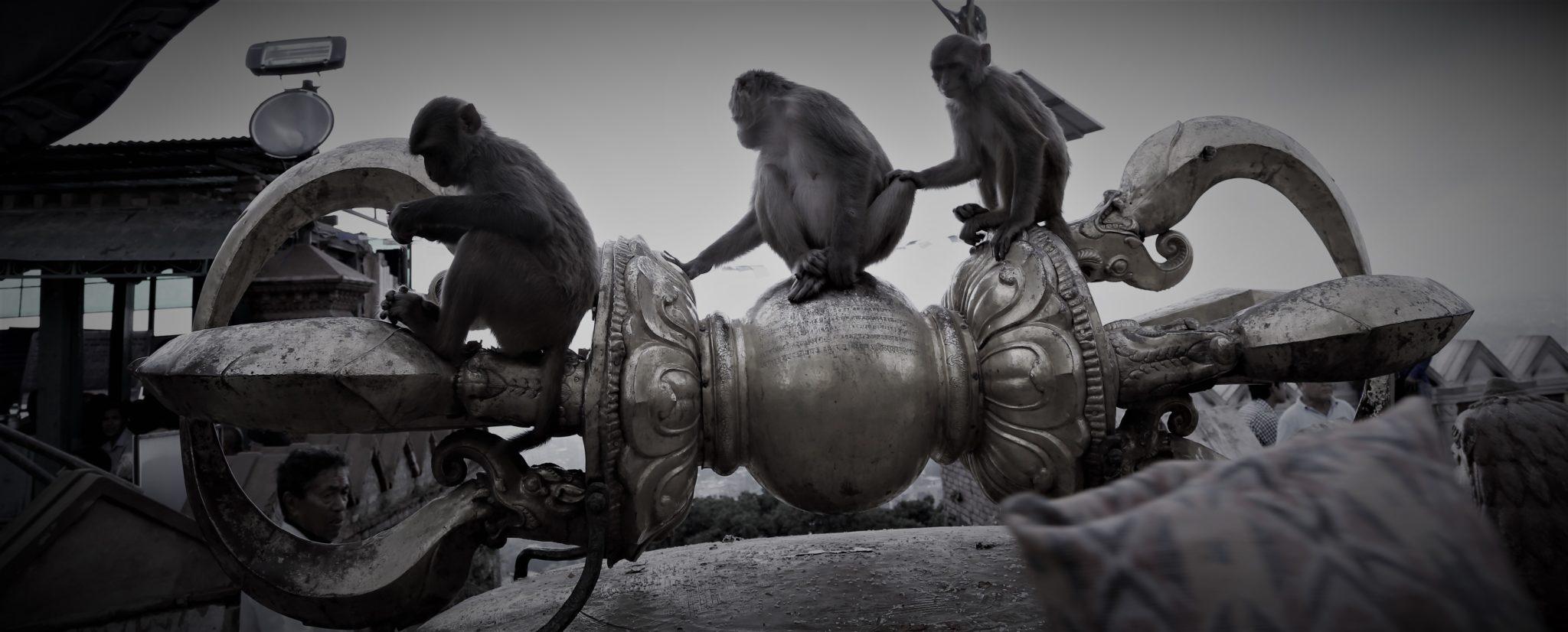 dorjé vajra Swayambhunath 3 singes sagesse
