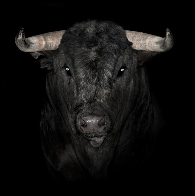 Oeil de taureau - Mes Indes Galantes - Lithothérapie
