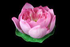 Le lotus, ou l'élévation de l'âme (Ashtamangala)