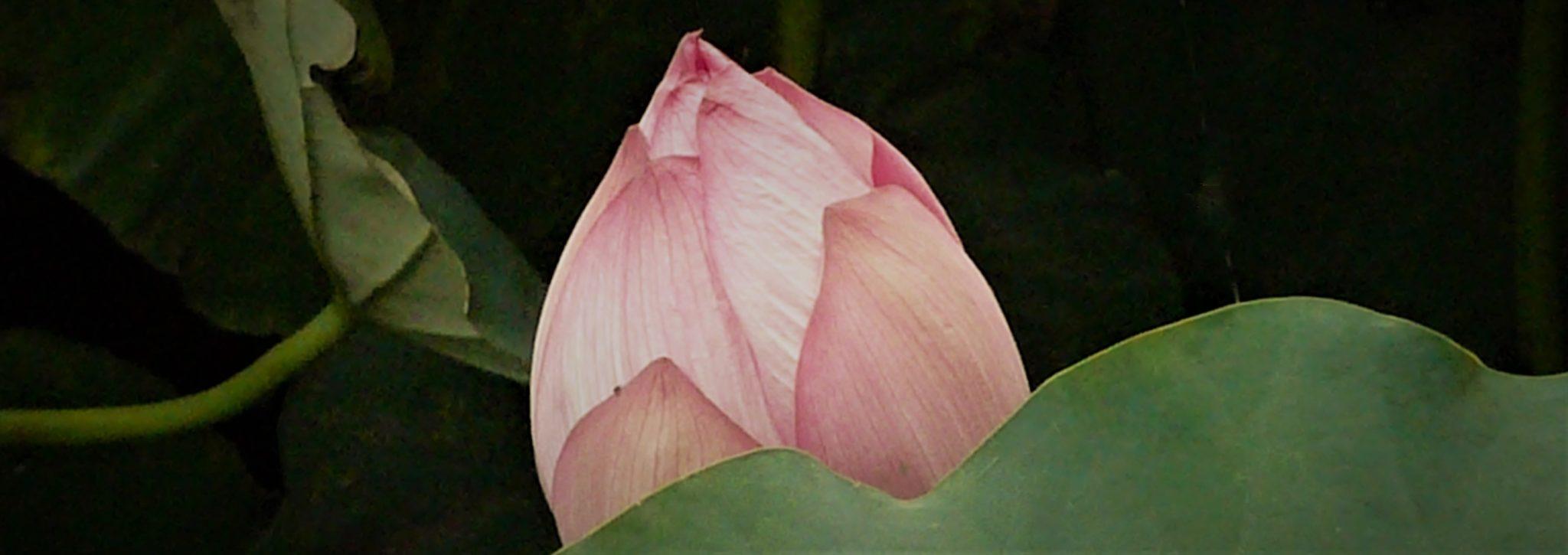 Lotus Utpala Ashtamangala Vajrayana