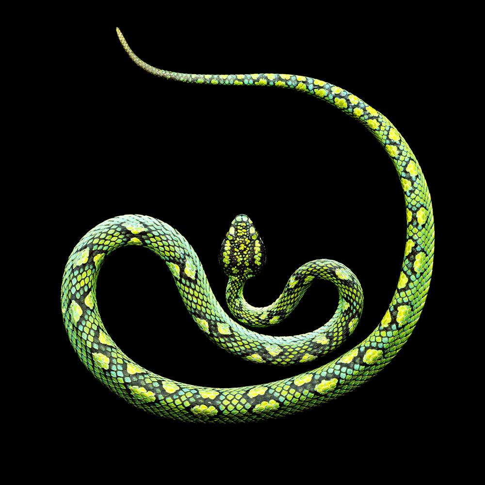 Serpentine - Mes Indes Galantes Blog - Propriétés
