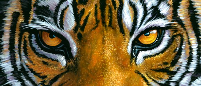 Oeil de tigre - Mes Indes Galantes - Lithothérapie