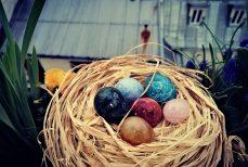 Yoni, l'œuf de la fertilité