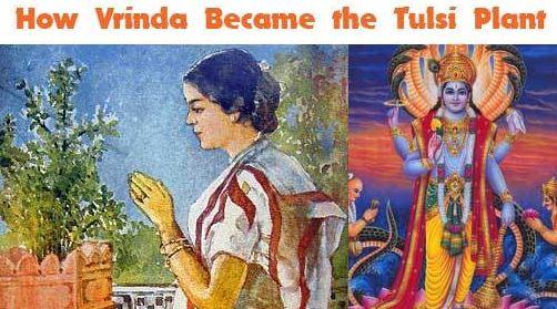 Tulsi Basilic Mes Indes Galantes Vishnu