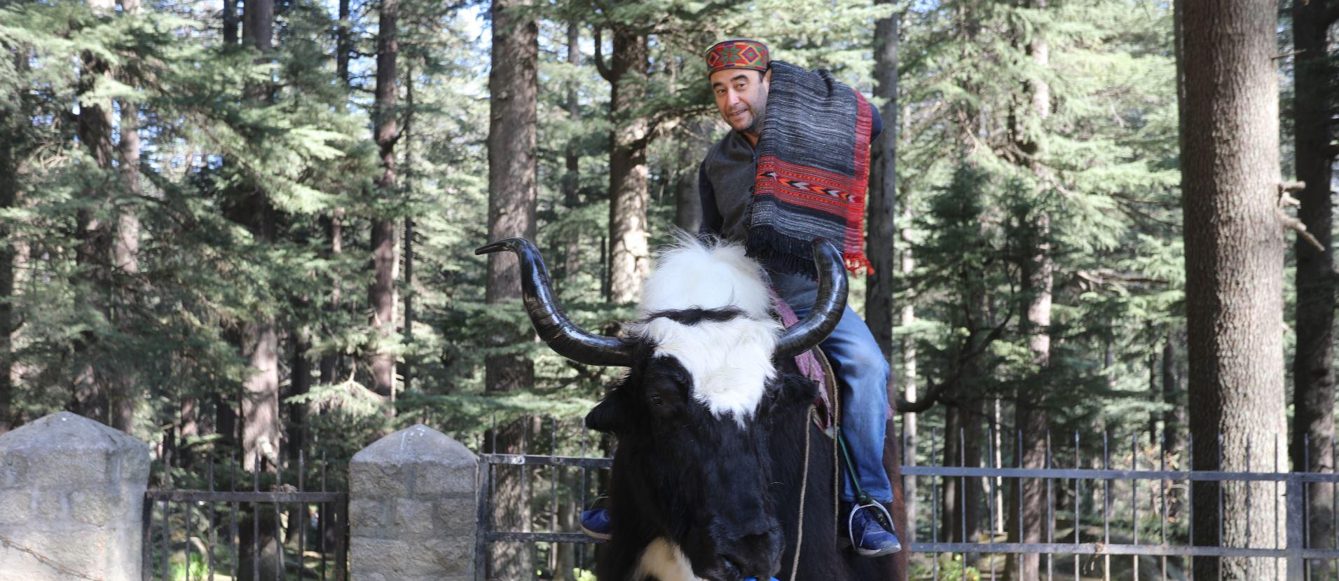 Laine de Manali Inde Himachal Pradesh Cachemire Mes Indes Galantes