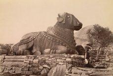 Nandi fidèle monture de Lord Shiva
