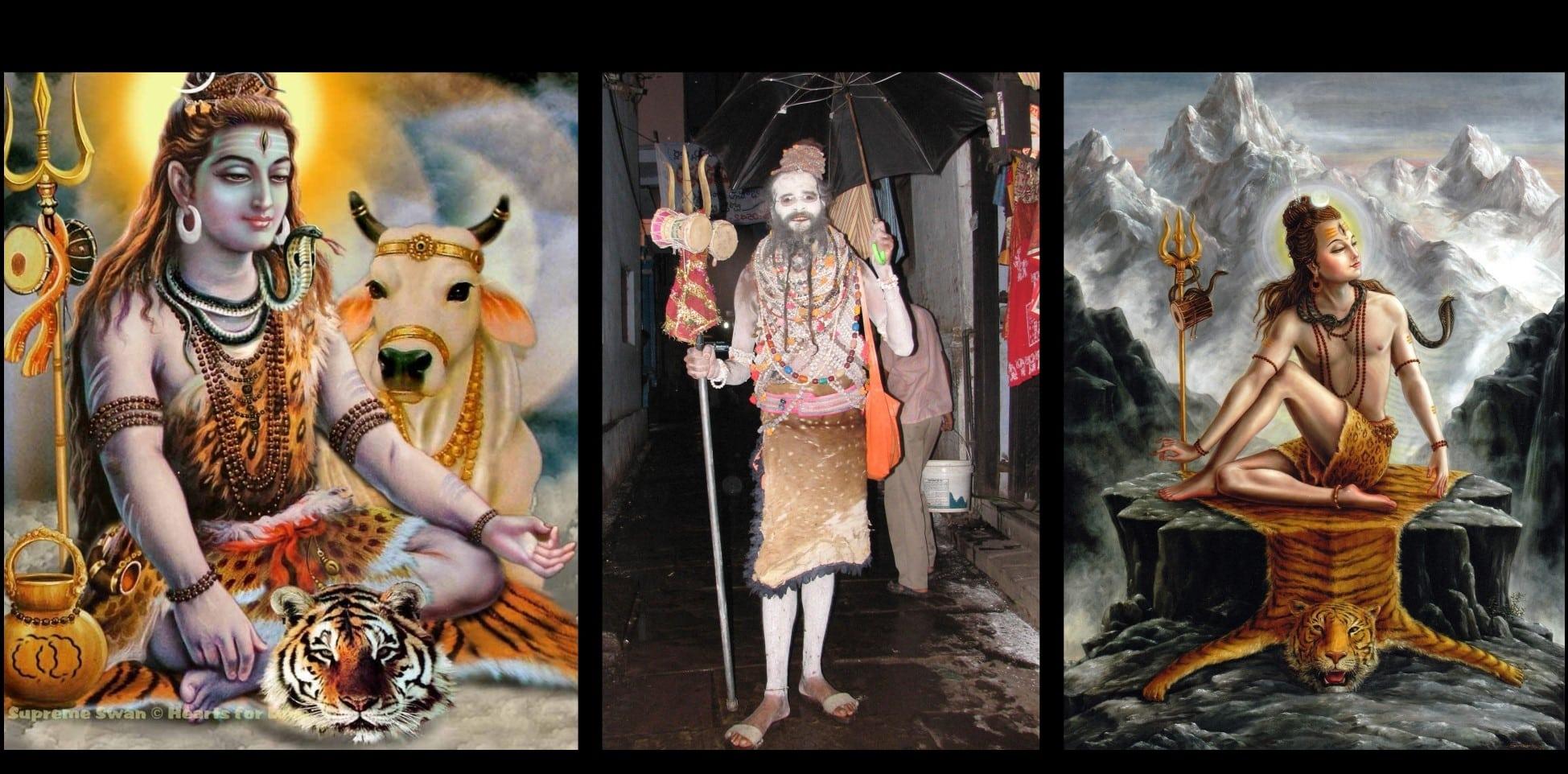 Tigre Shiva Mes Indes Galantes