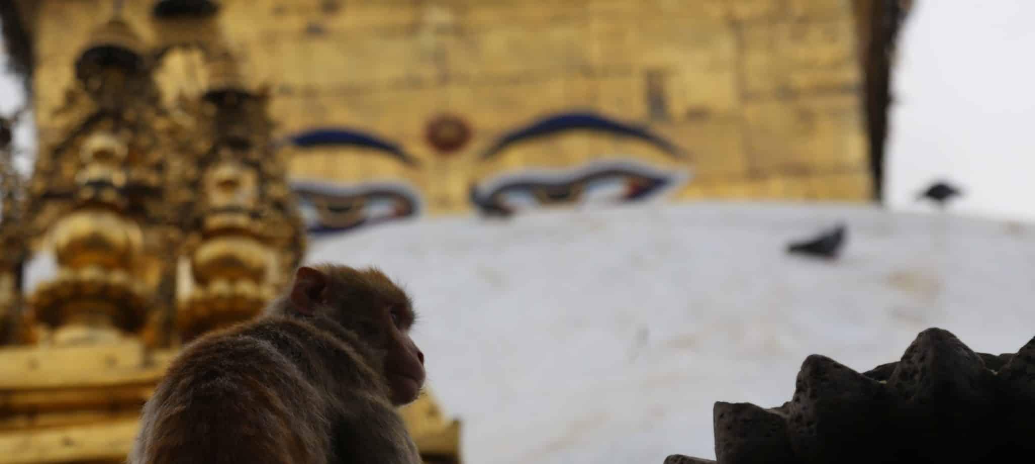 Yeux de Bouddha Katmandou