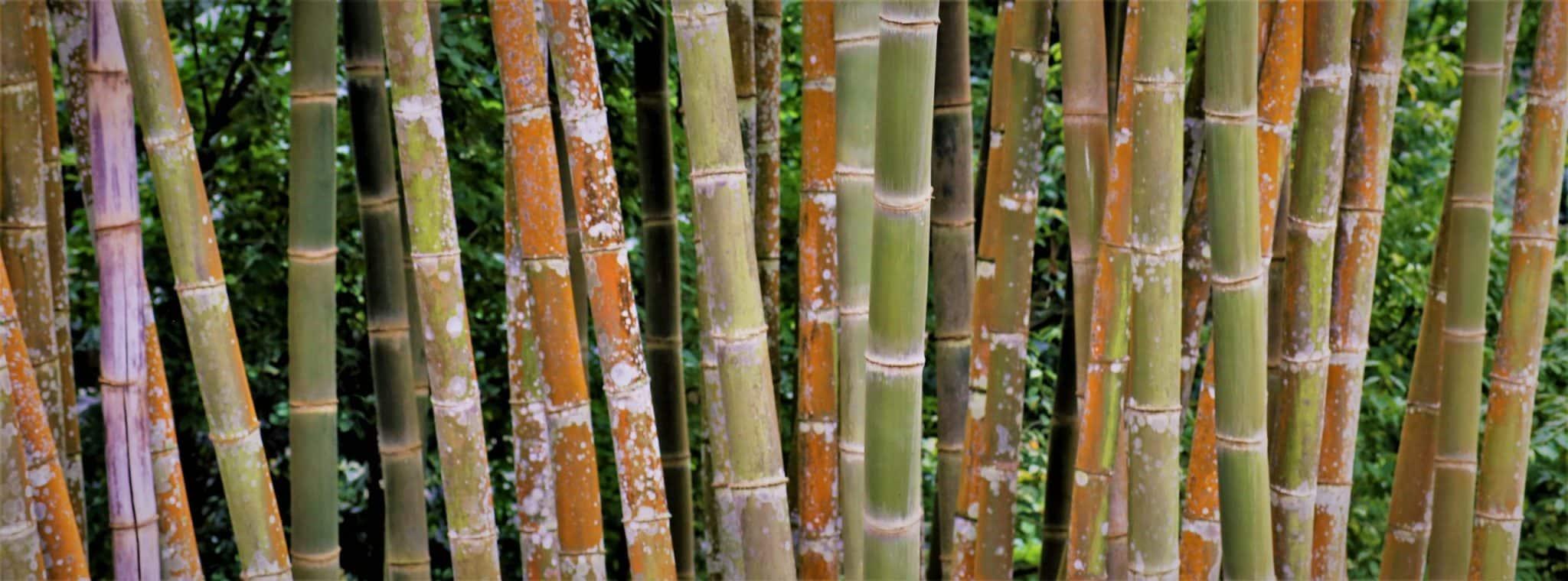 Bambou Carillon balinais Cloche à vent Chaîne à vent