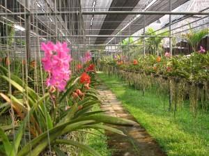 ChangMai3 (3)