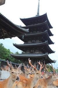 Nara (58)