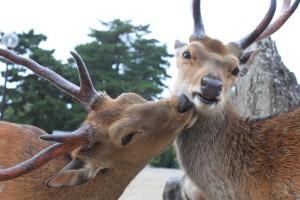 Nara (67)