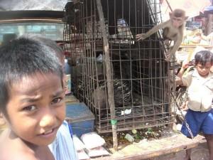 cambodge (285)