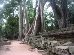 cambodge (411)